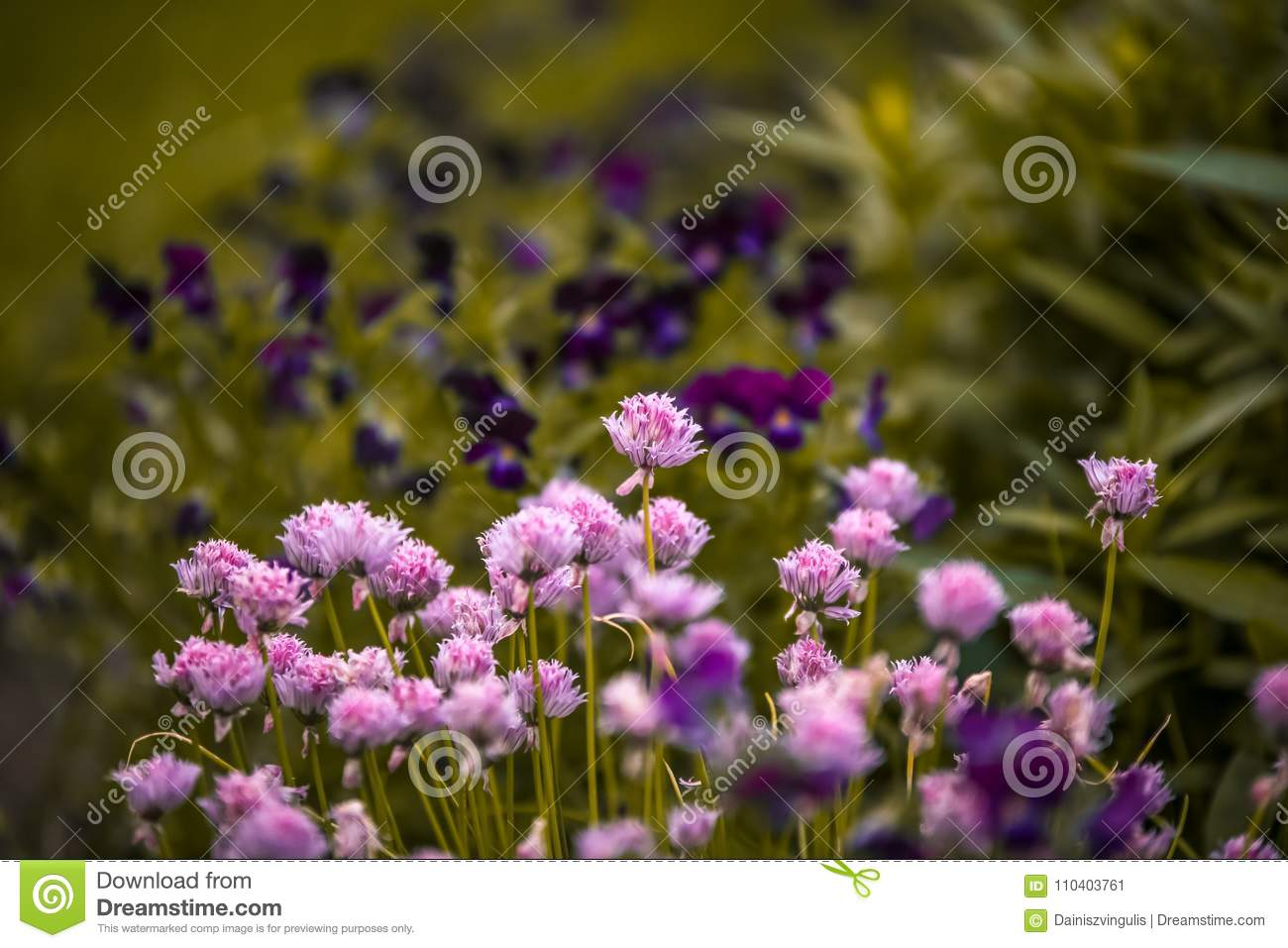 Summer Garden With Pink Flowers Stock Image - Image of blur, summer ...