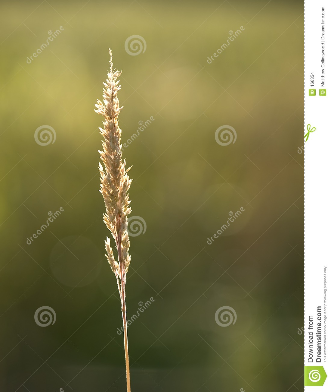 Download Summer Grass stock photo. Image of golden, agriculture - 166854
