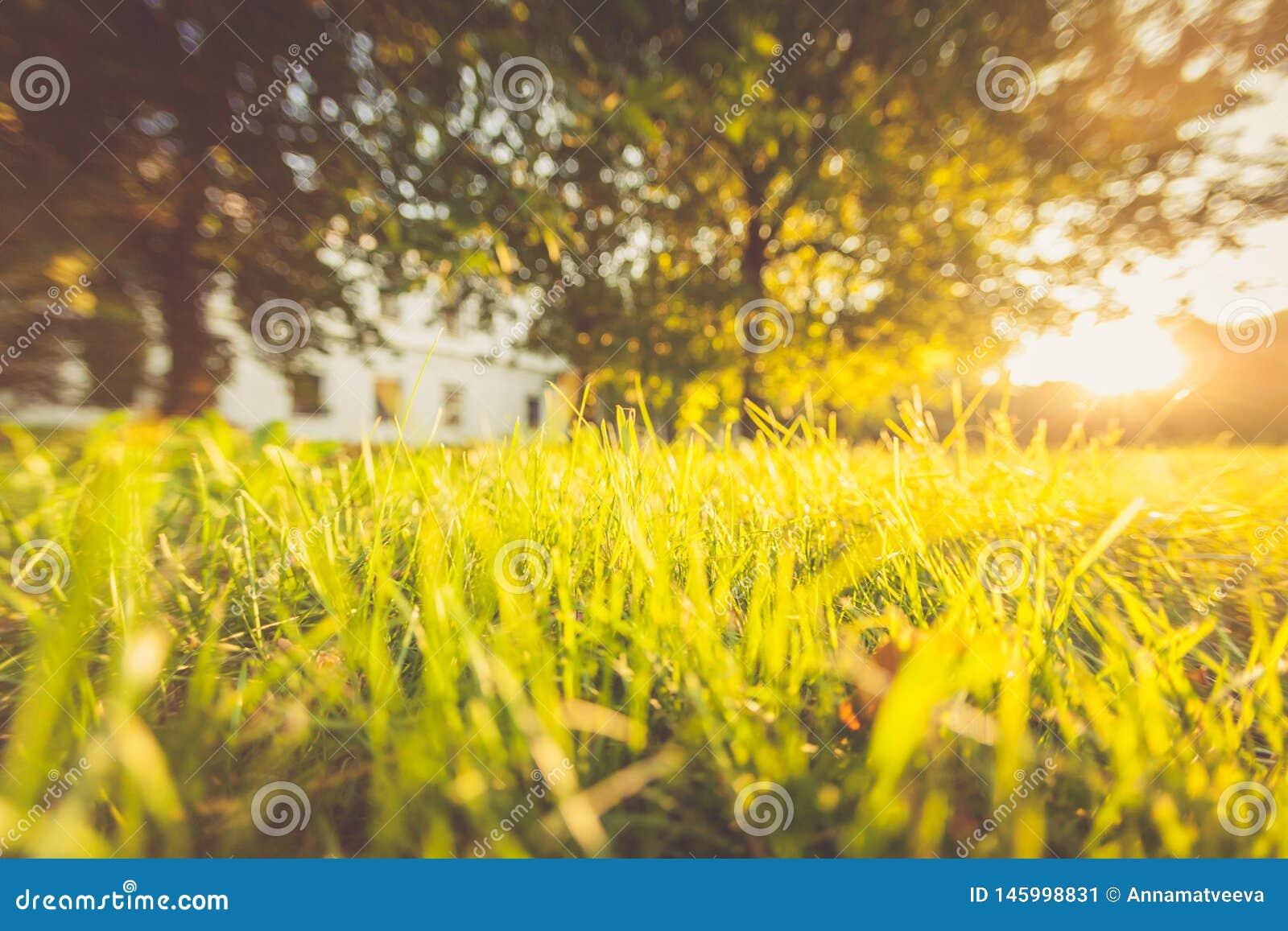 Summer, grass, sunlight, bokeh, abstract landscape image