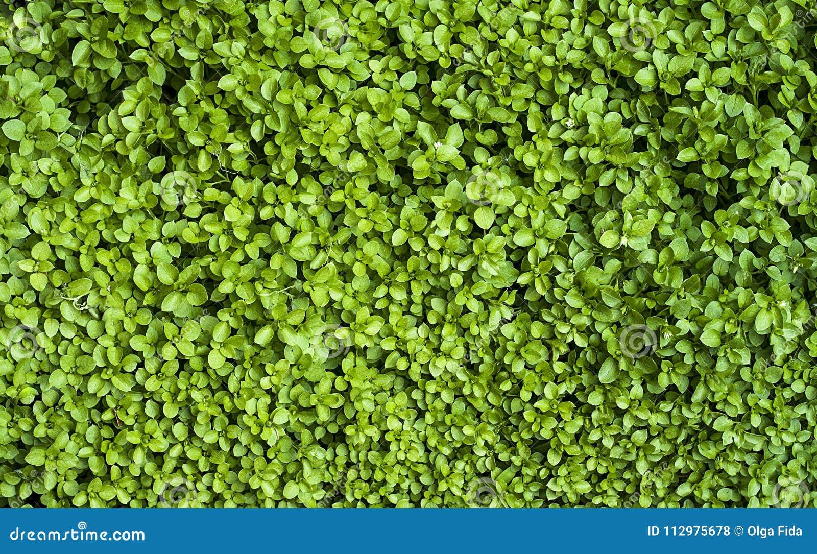 Summer, green grass background