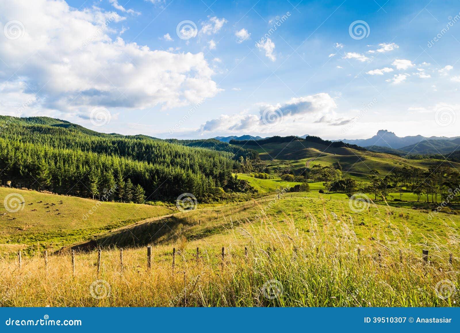 Summer green New Zealand landscape