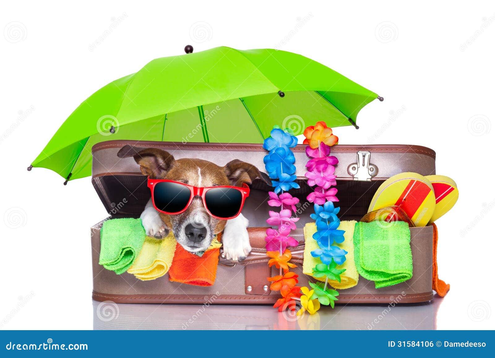 Air Bag Jack >> Summer holiday dog stock photo. Image of baggage, isolated - 31584106