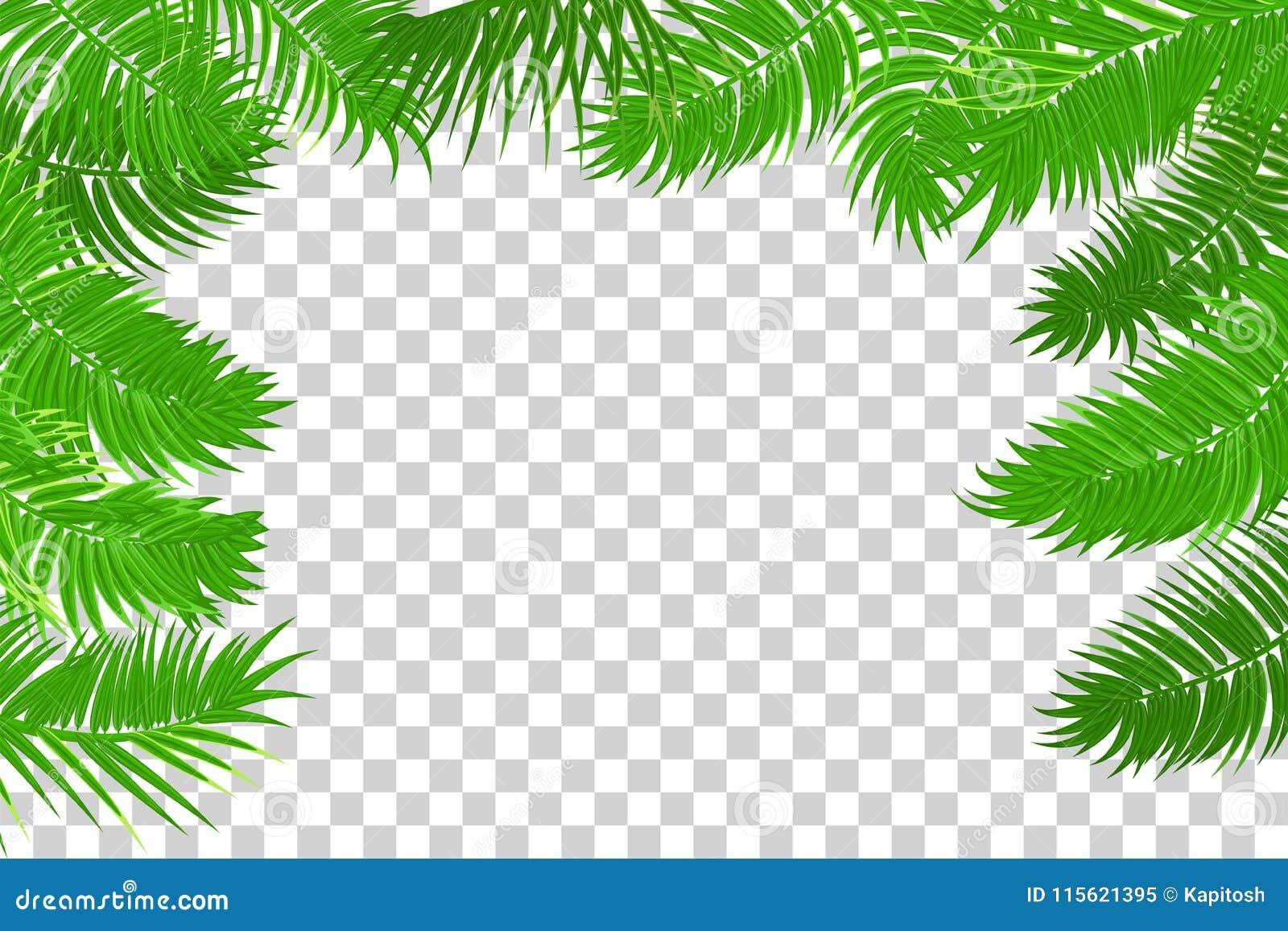 summer jungle palm leaf frame stock vector illustration of border