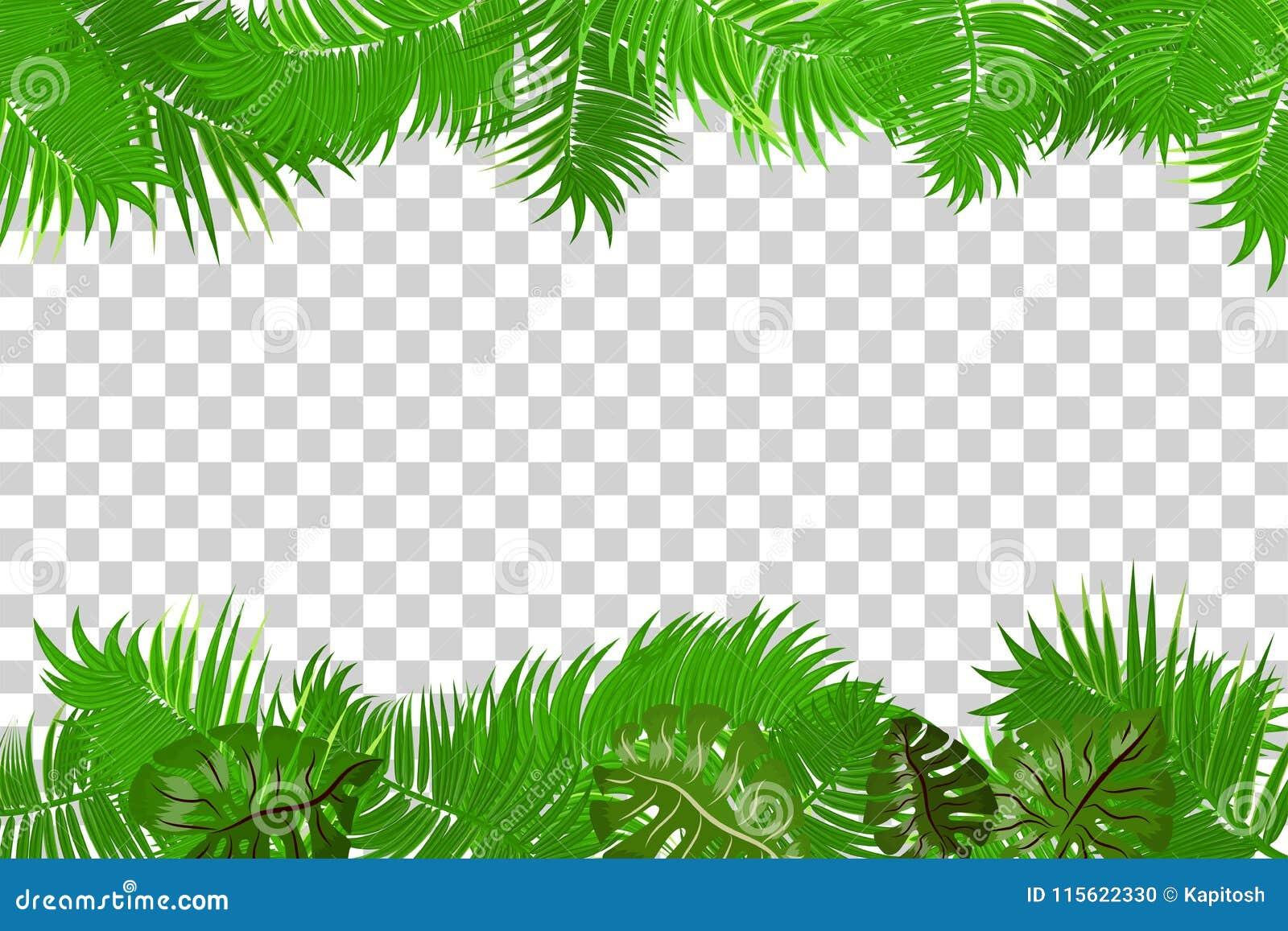 summer jungle palm leaf frame stock vector illustration of jungle