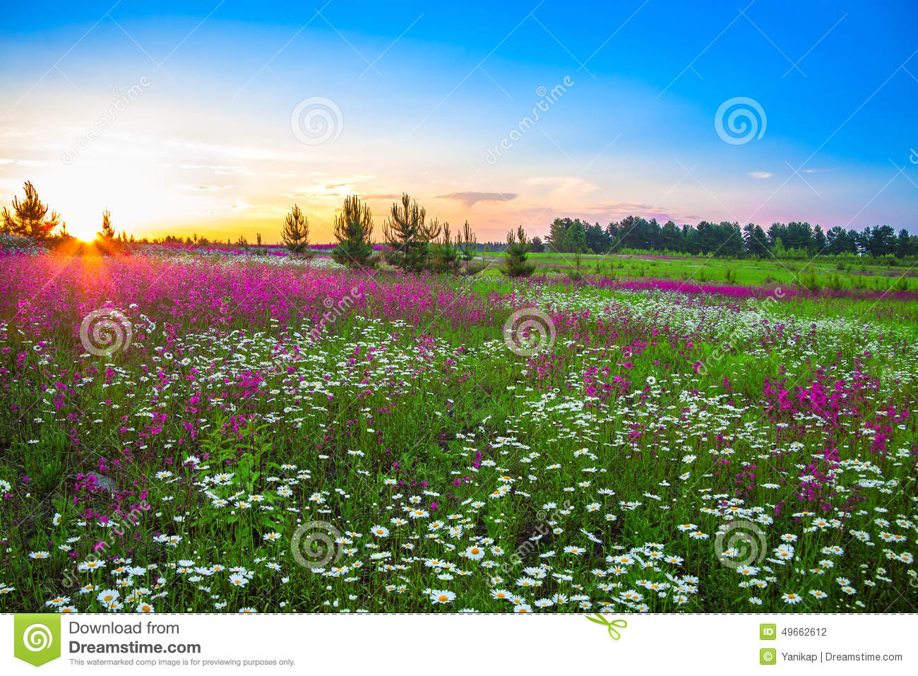 Summer Landscape With Flowers On A Meadow And Sunset Stock