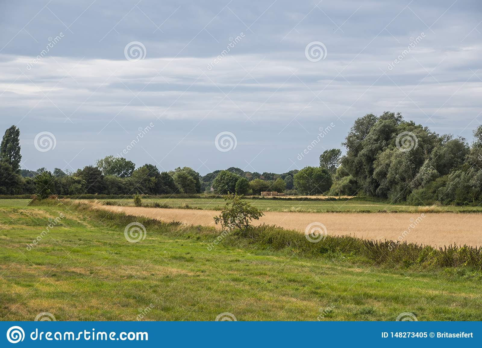 Summer landscape with green grass and cloudy blue sky