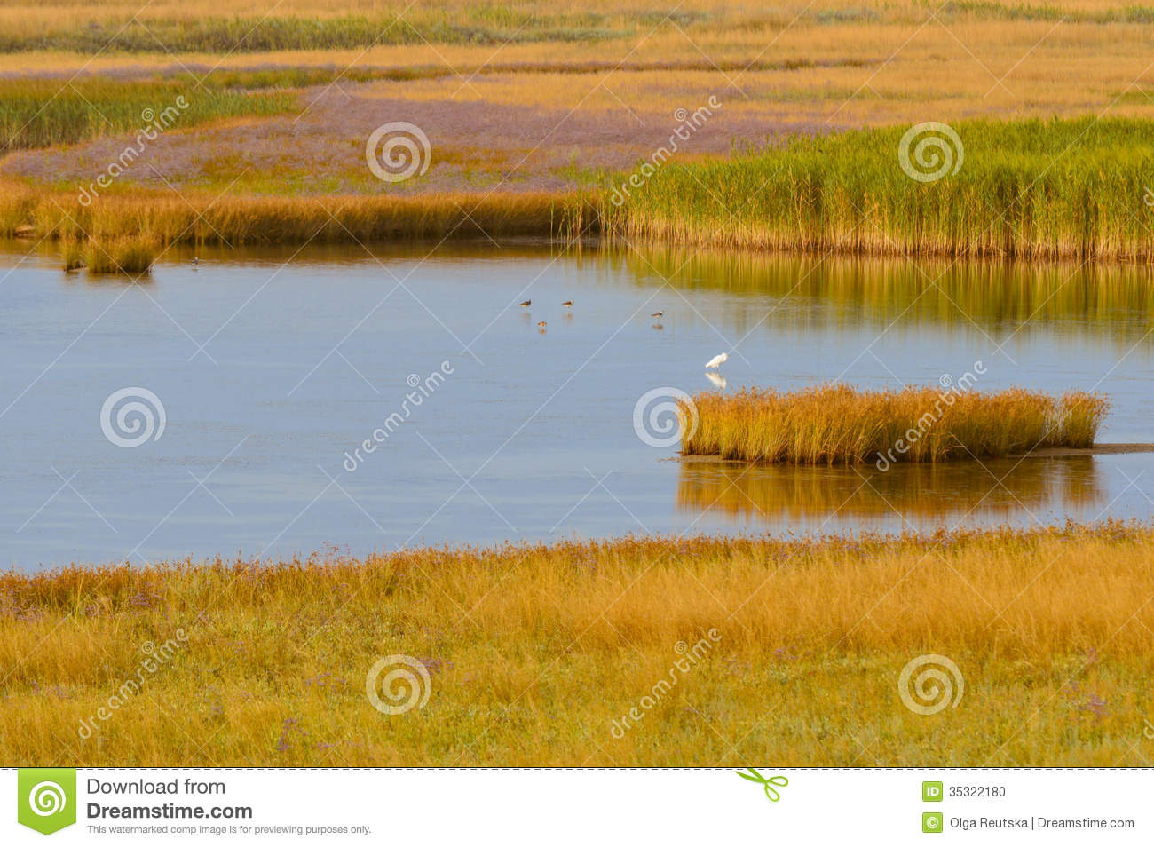 Download Summer Landscape On Lake With Cane Bush On Sunset Stock Photo - Image of herb, bird: 35322180
