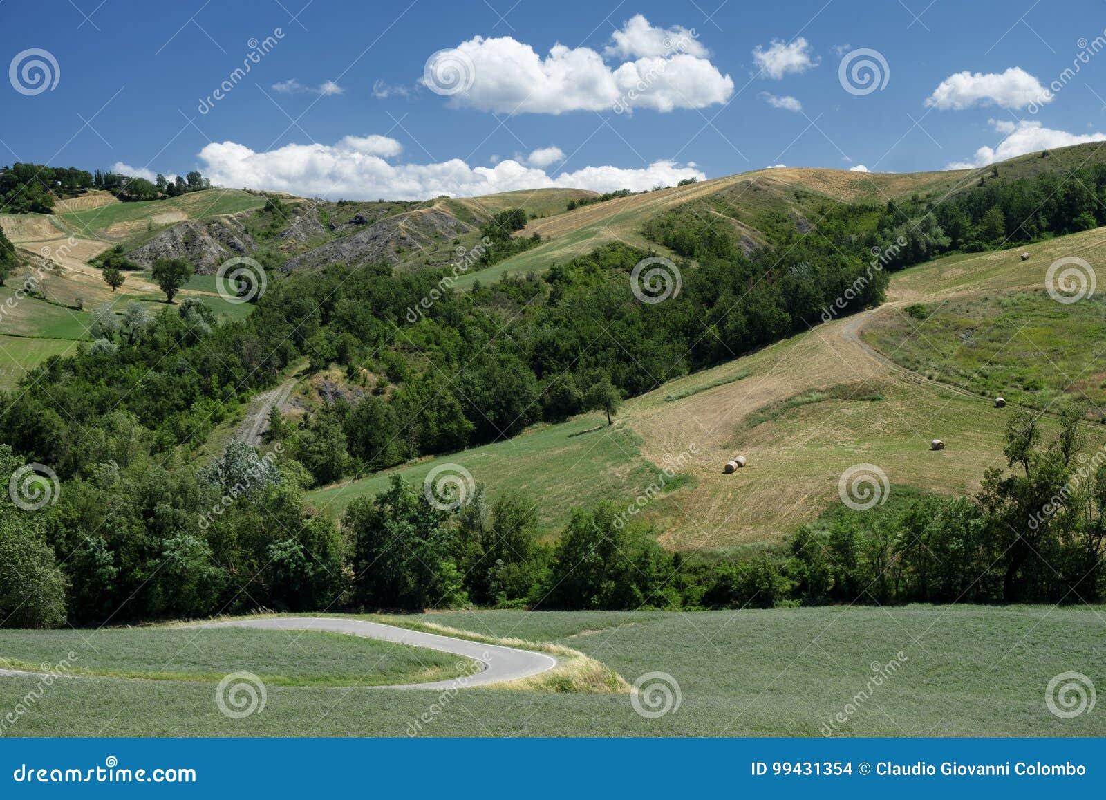 Rivalta di Lesignano Parma, Italy: summer landscape