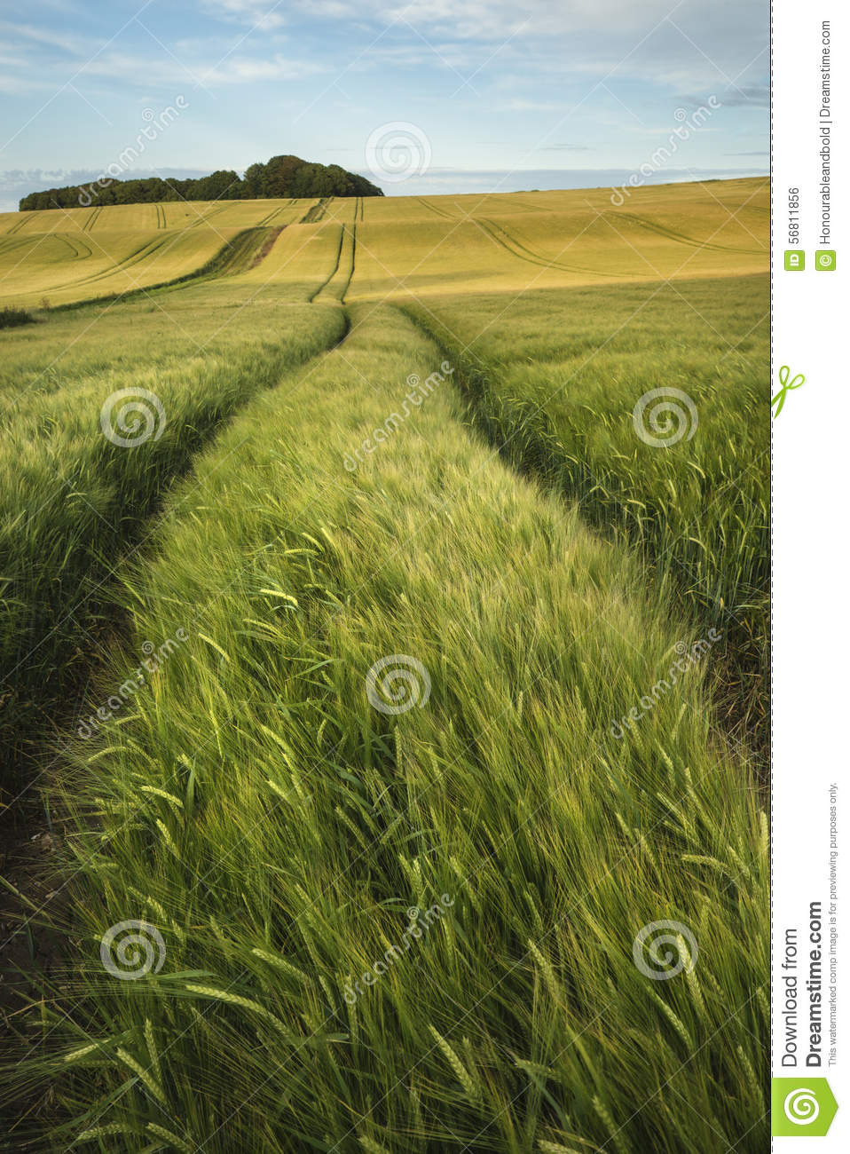 Summer Landscape Over Agricultural Farm Field Of Crops In