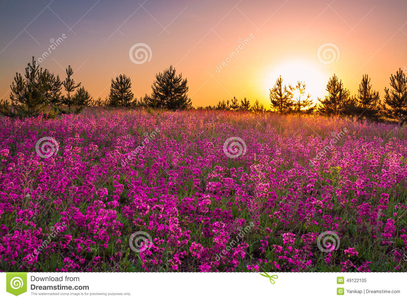 Summer Landscape With Purple Flowers On A Meadow And