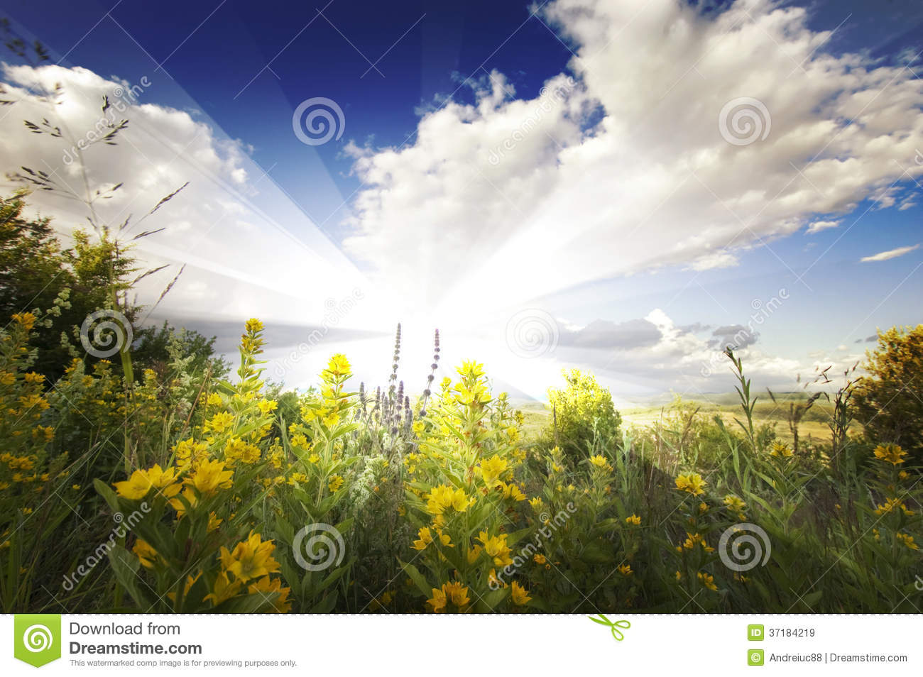 Summer landscape with sun rays, clouds, blue sky and yellow flowers