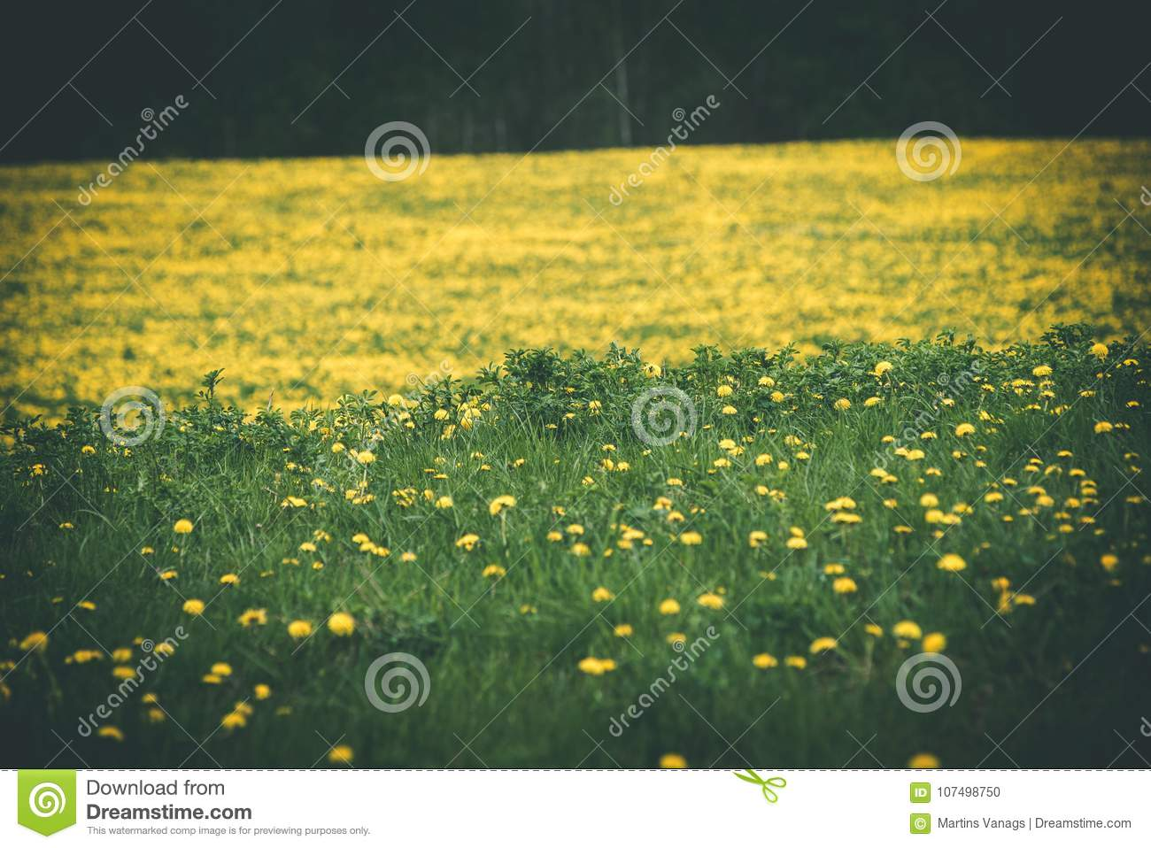 yellow flowers on the green grass full movie download