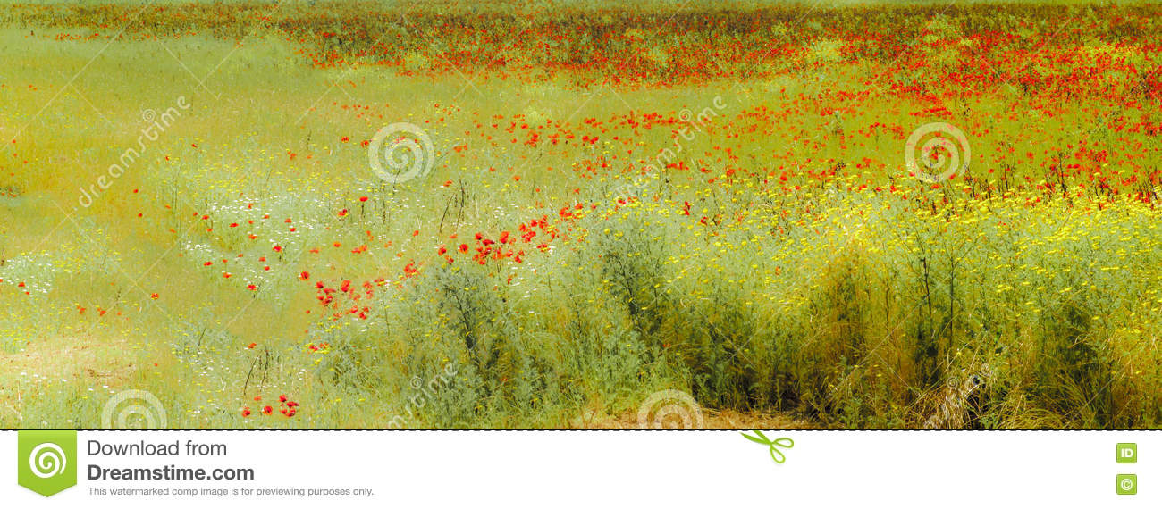 Poppies on summer meadow
