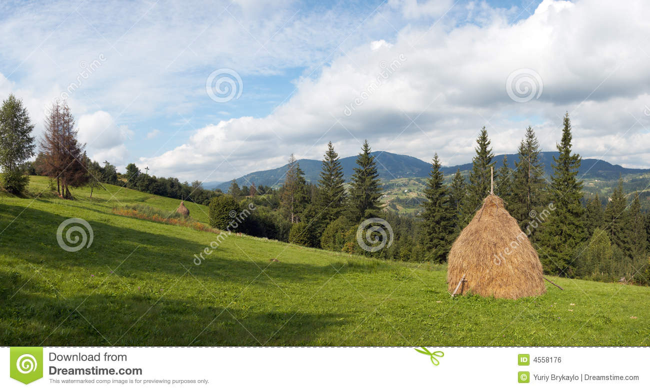 Summer Mountain Meadow Royalty Free Stock Image