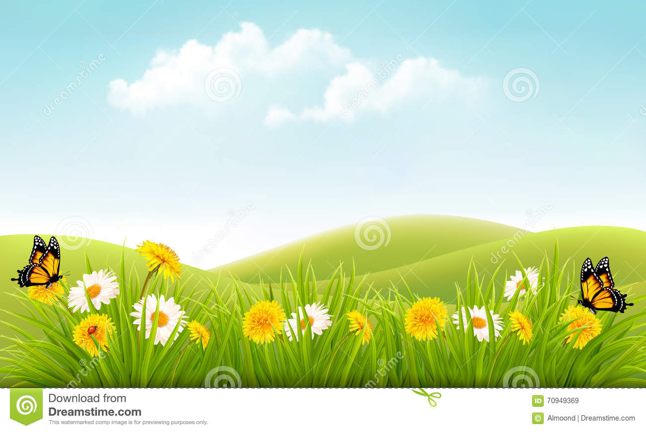 summer nature background with grass and flowers and butterflies