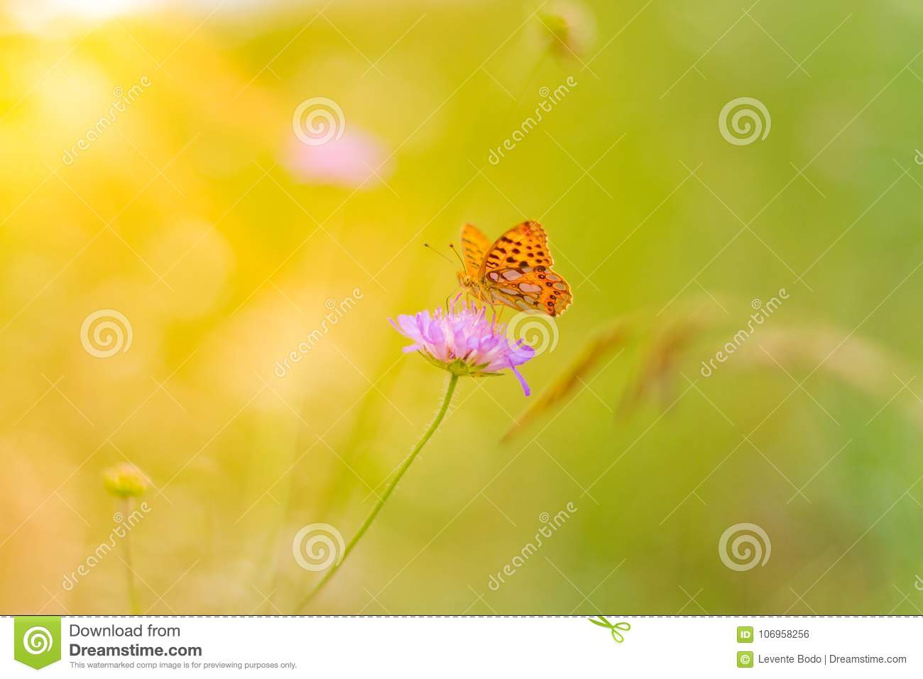Beautiful Nature Close-up, Summer Flowers And Butterfly