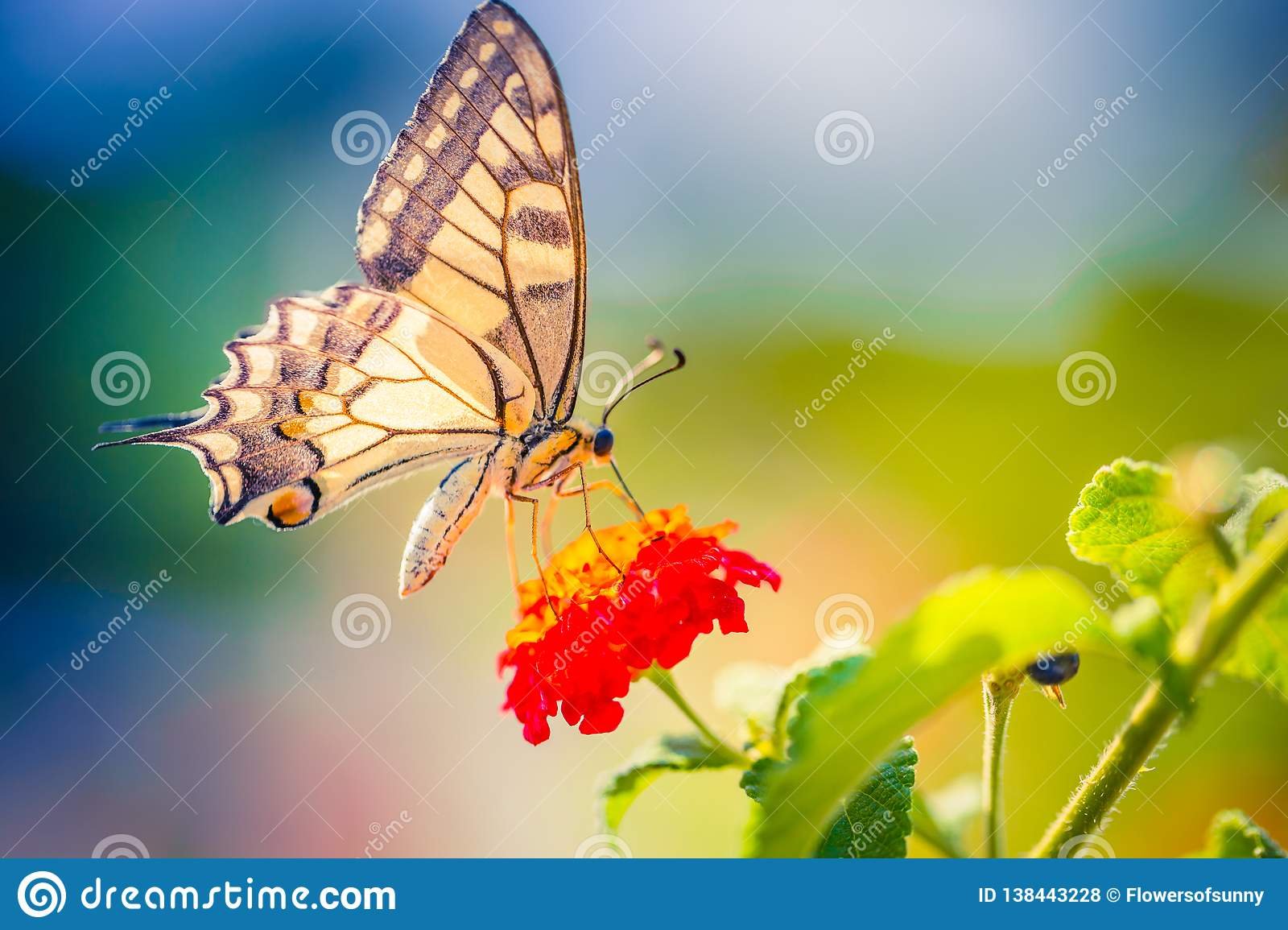 Summer Nature View Of A Beautiful Butterfly With Colorful Meadow Wonderful Scene Under Sunlight Stock Photo Image Amazing Background 138443228