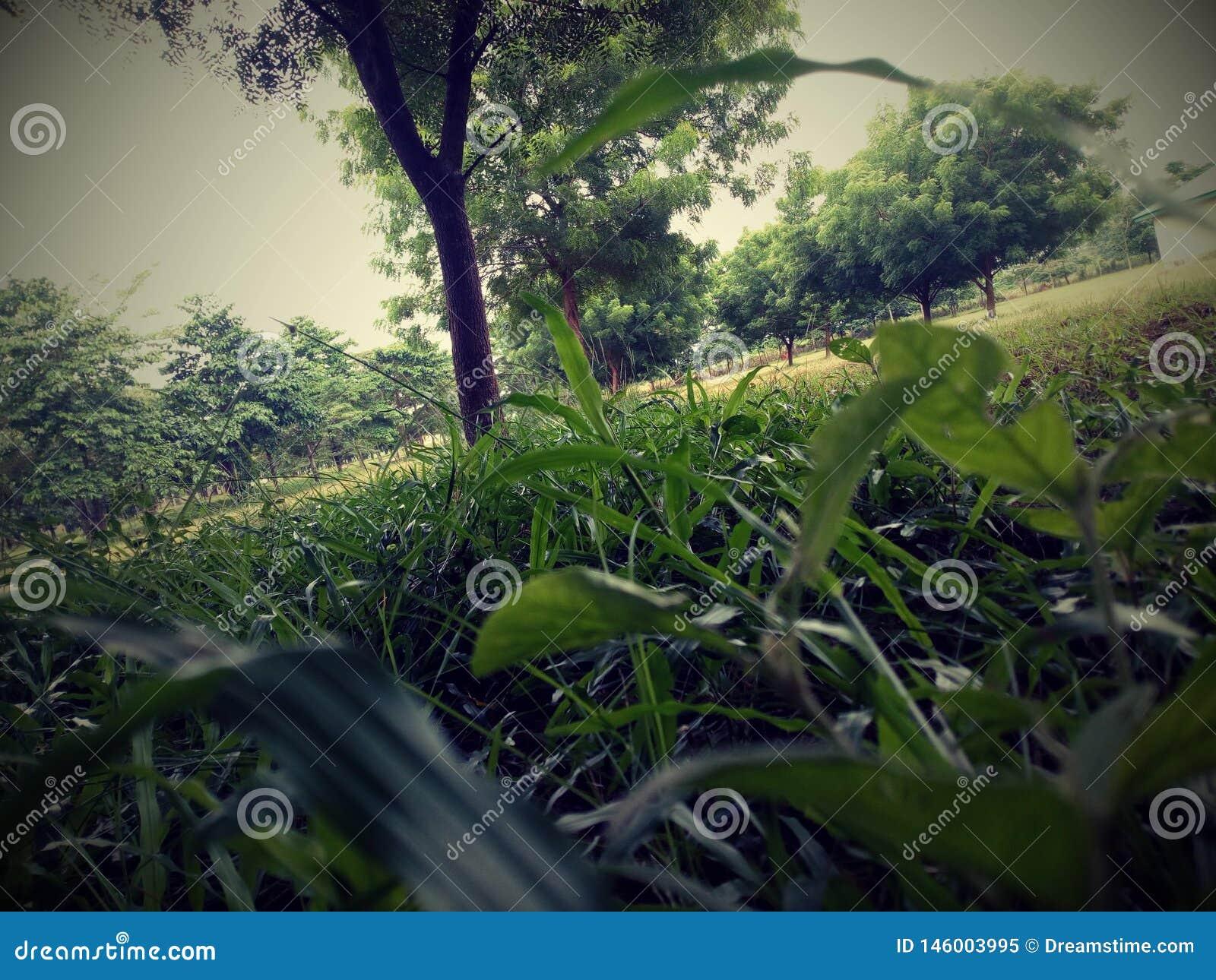 Summer in Nigeria