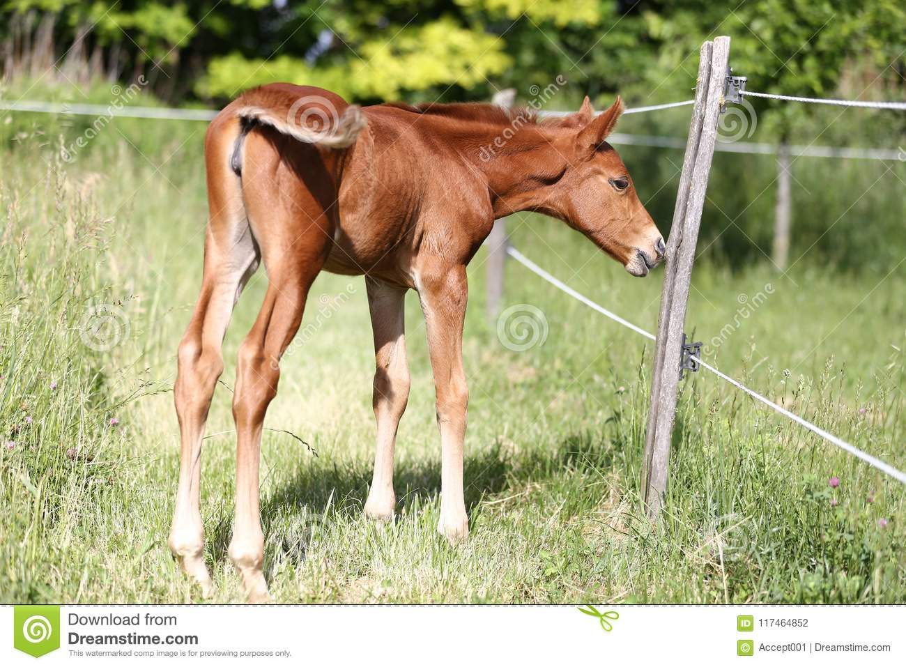 Summer Photo Of A Young Baby Horse Stock Photo Image Of Family Domestic 117464852