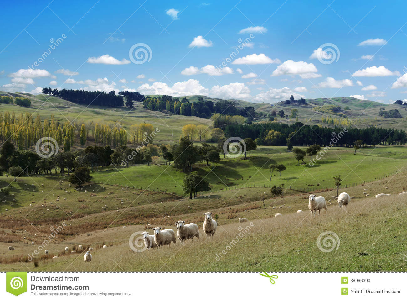 Summer picturesque landscape with herd of sheep