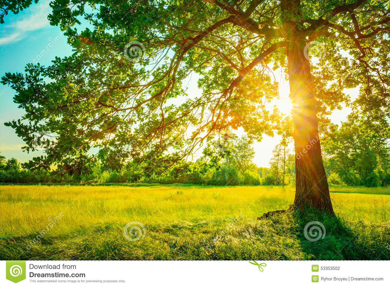 Summer Sunny Forest Trees And Green Grass. Nature