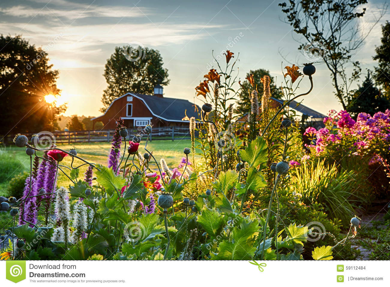 Flower garden and sunrise stock photo. Image of bright - 39952492