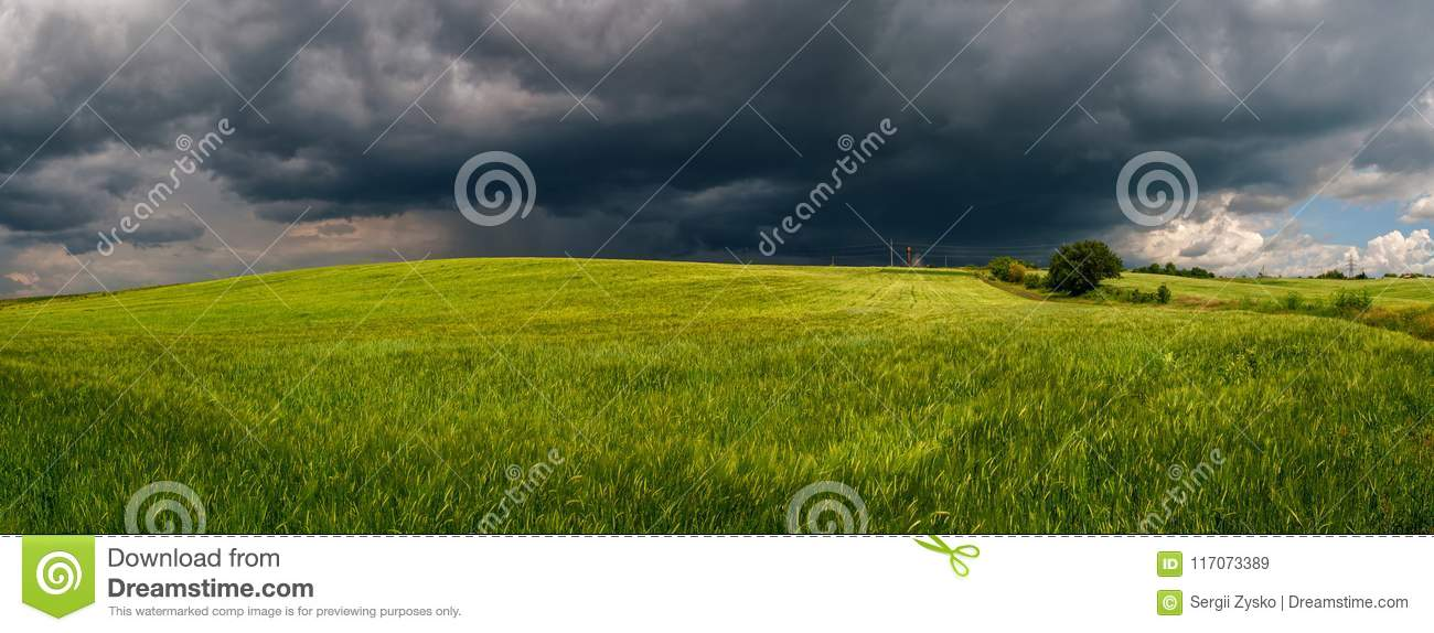 Summer thunderstorm in a wheat field