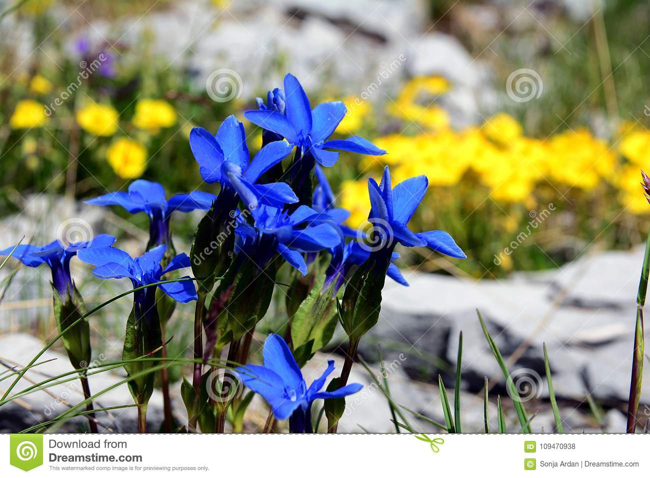 Nature rocks little blue flowers in stone hugs stock photo image nature rocks little blue flowers in stone hugs izmirmasajfo Choice Image
