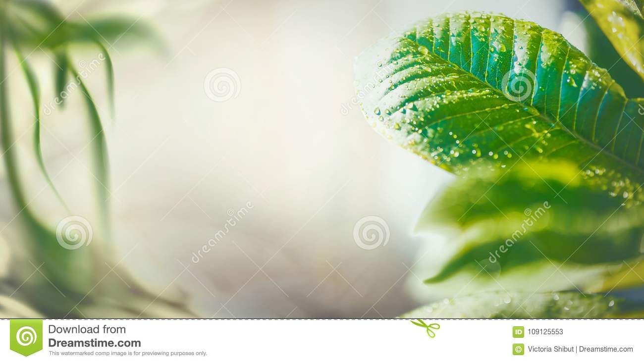 Summer time nature background with green tropical leaves, banner or template