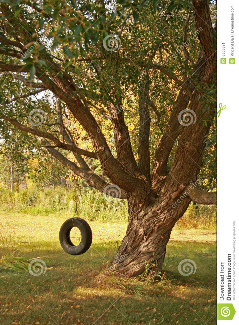Summer Tire Swing Stock Image Image Of Shadow Grass