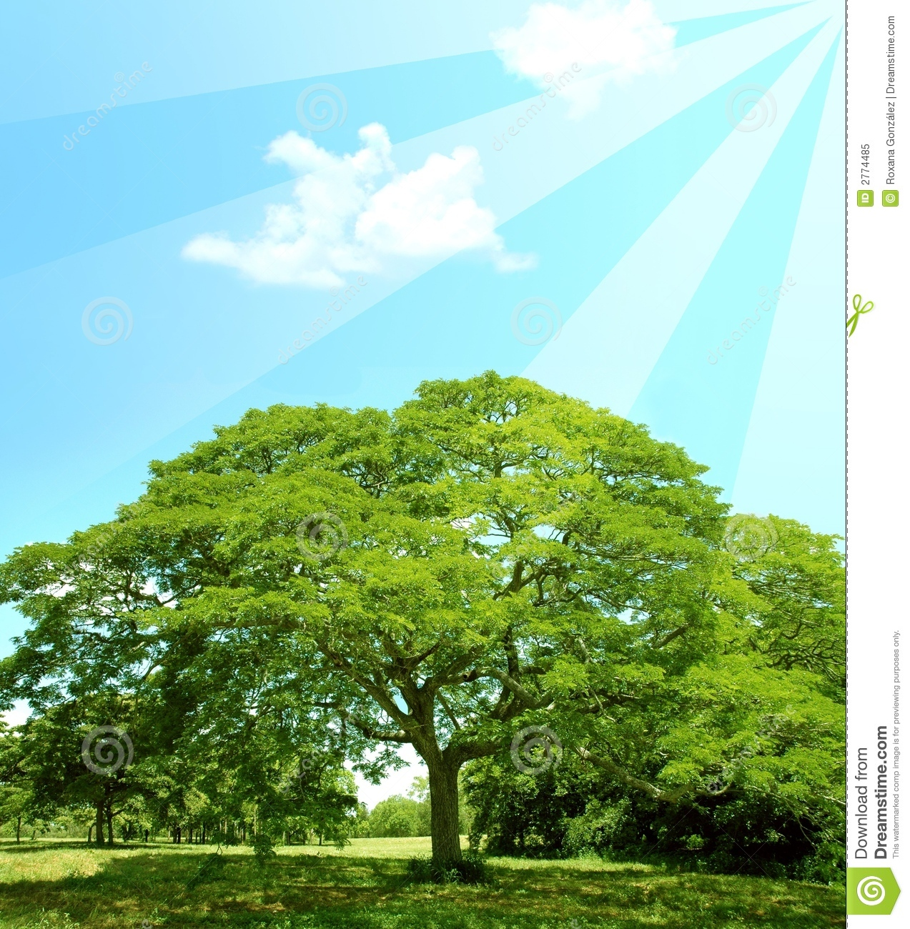 Summer Trees And Sun Rays Stock Image Image Of Fresh