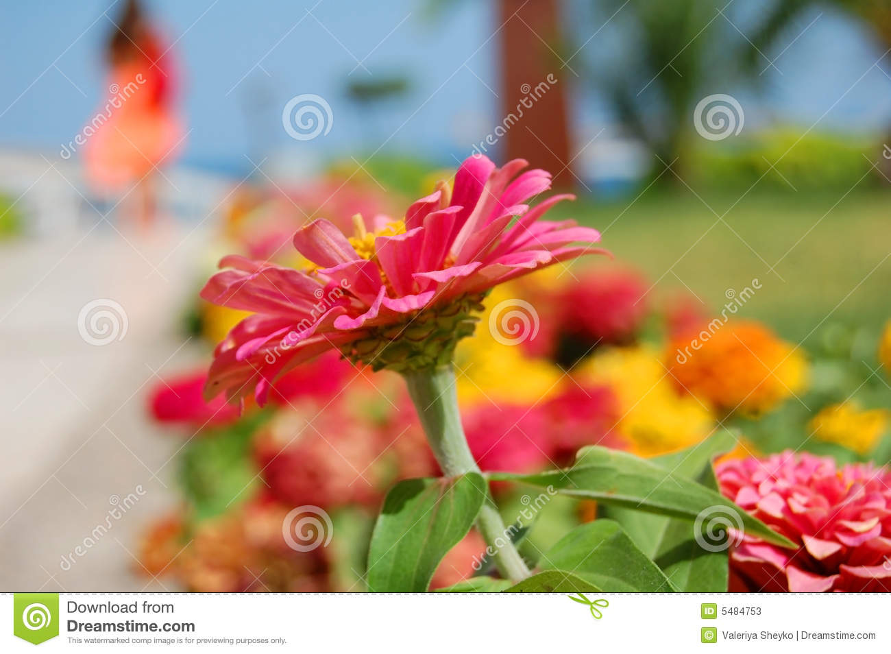 Summer vacations - catchy flower and a girl silhouette