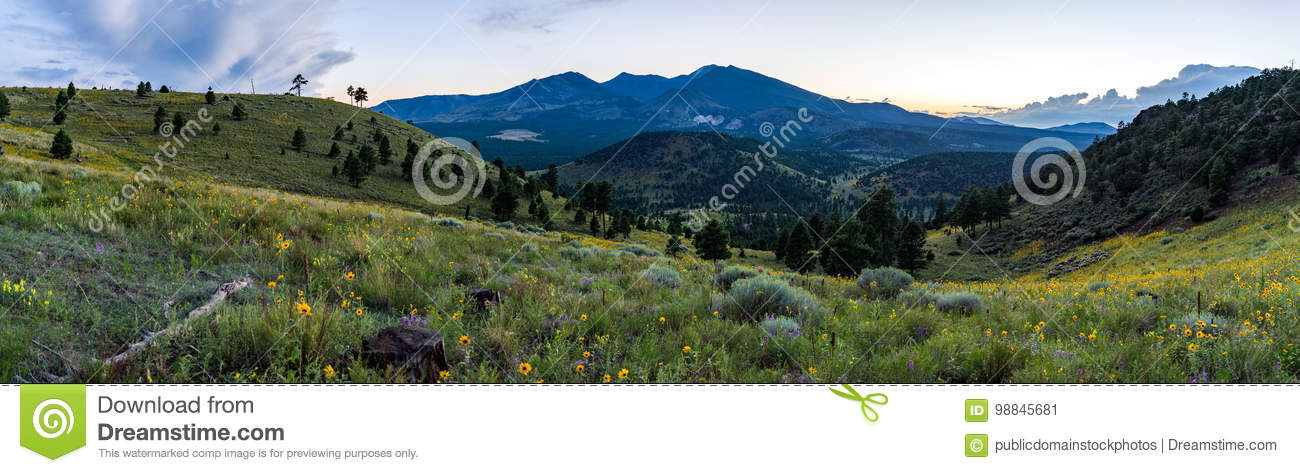 fd40f6d3fb9 Free Public Domain CC0 Image  Summer Wildflowers East Of The Peaks ...