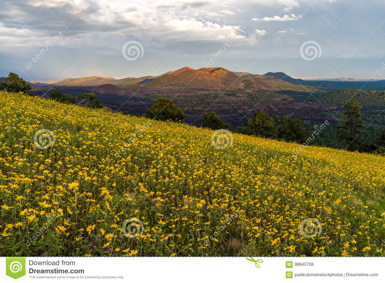 Free Public Domain CC0 Image  Summer Wildflowers East Of The Peaks ... ffdd8bc726b