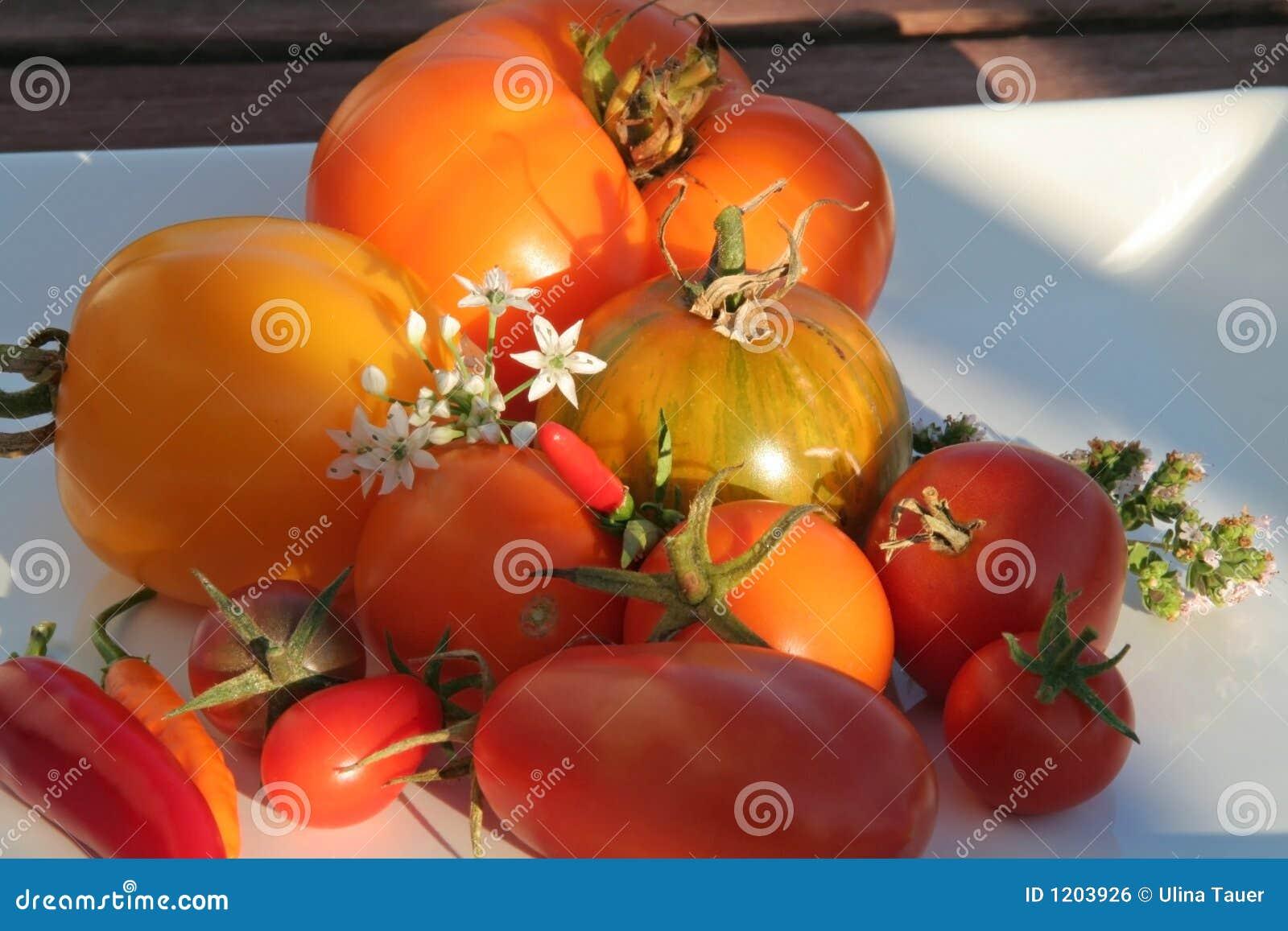 Summerly Harvest 7