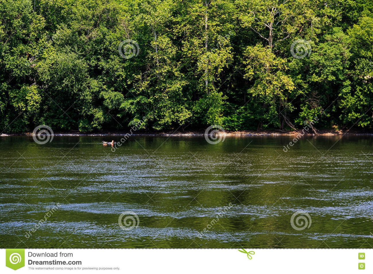 Summertime On The Delaware River Easton Pa Editorial Photo - Image
