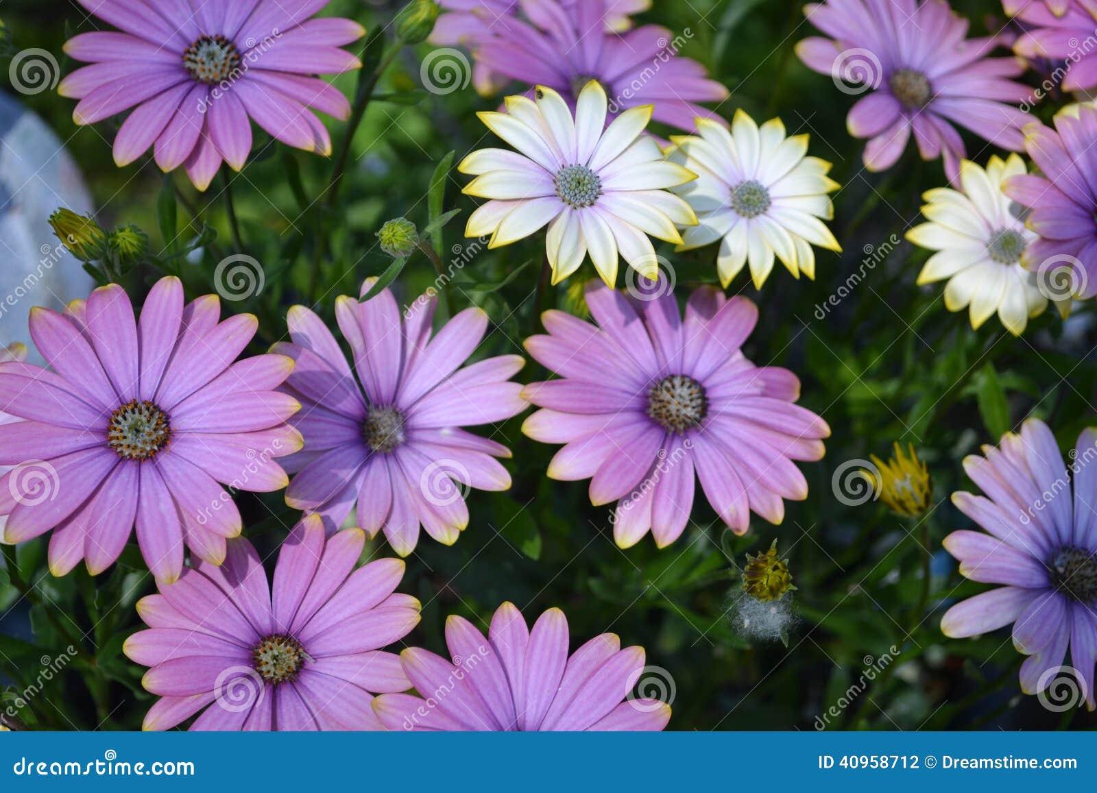 summertime sweet blue sunrise stock photo image 40958712
