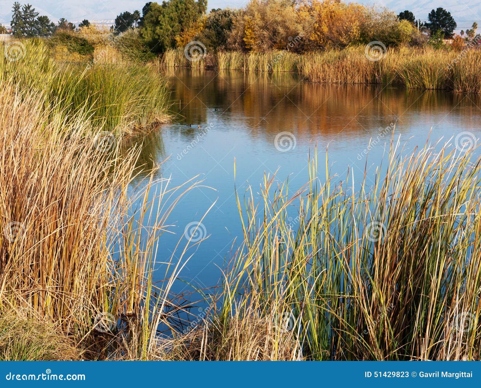 Sumpfgebiet im Bucht-Bereich