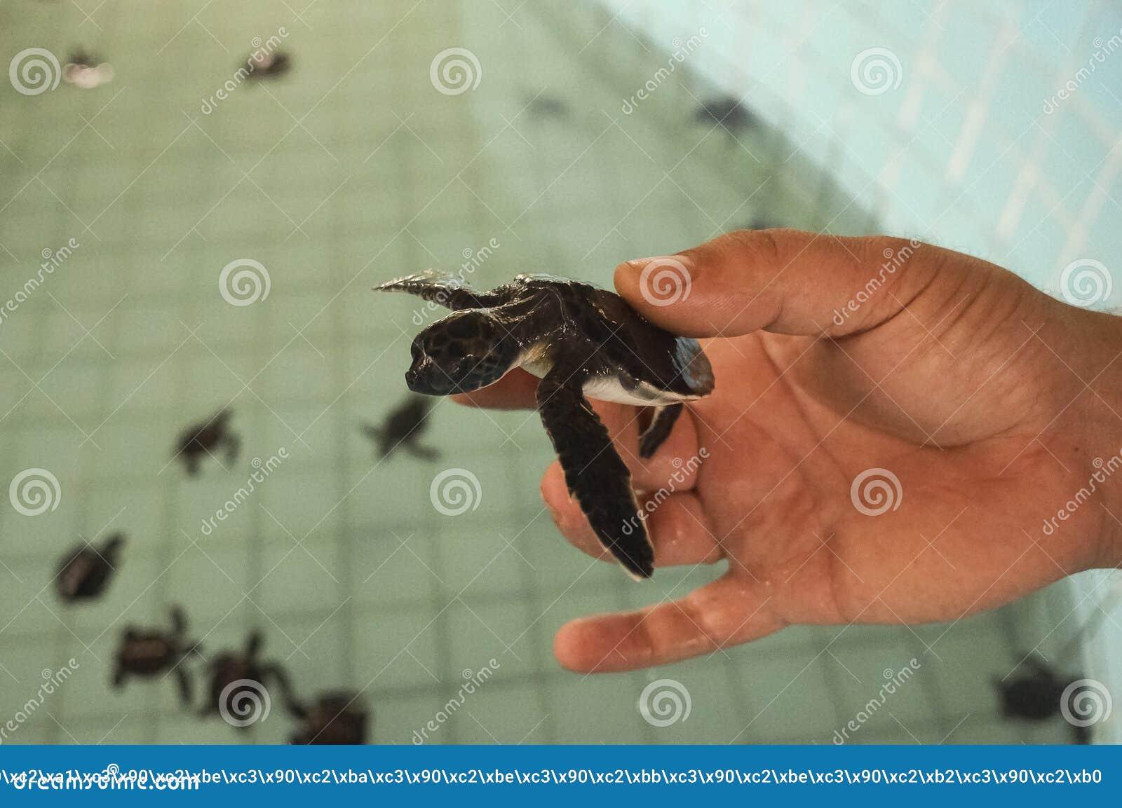 Sumpsköldpaddalantgård, för underhållet av befolkningen