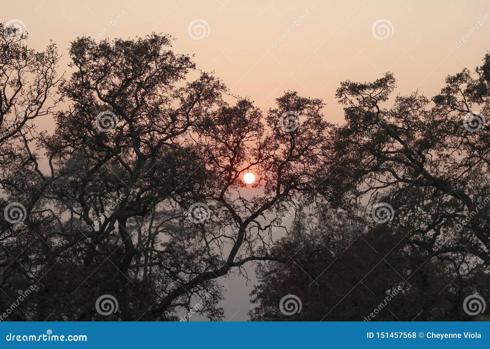 Sun ardiente enmarcado por los árboles