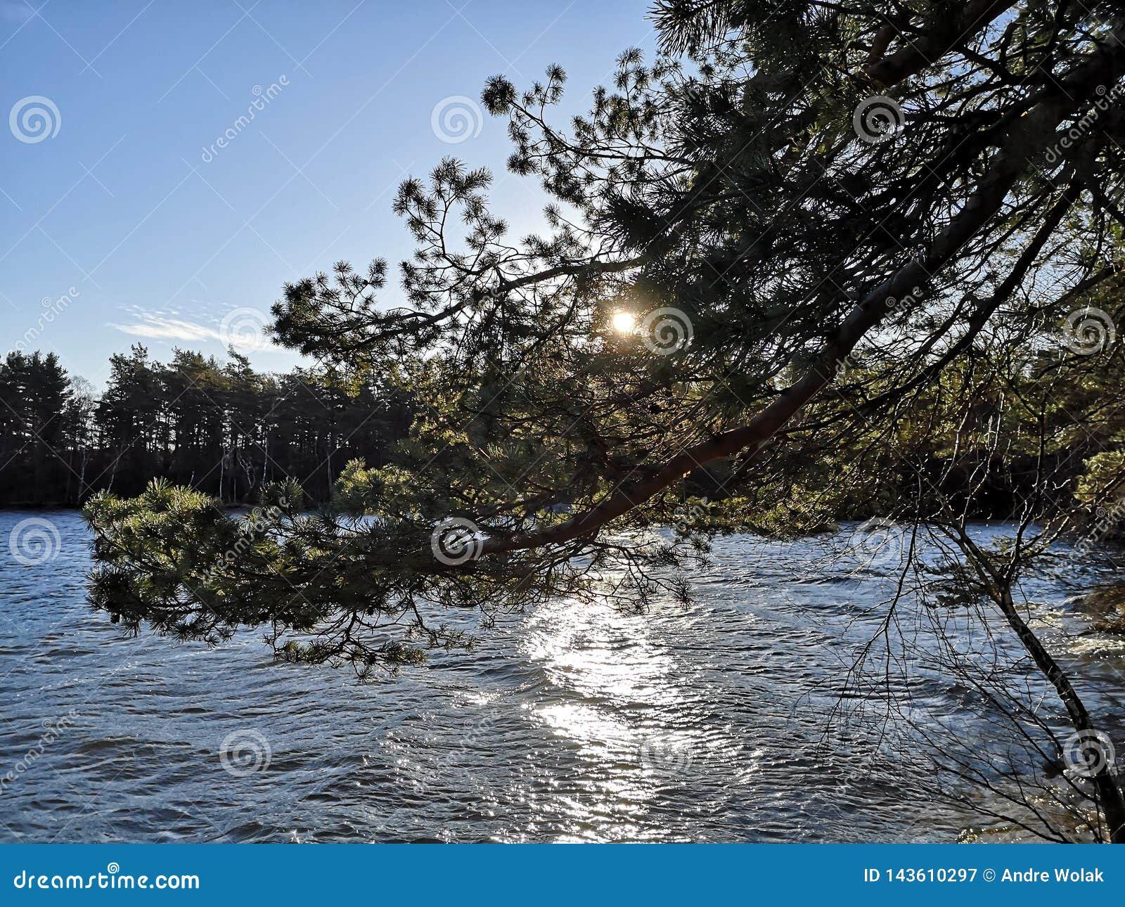 Sun atrás do ramo