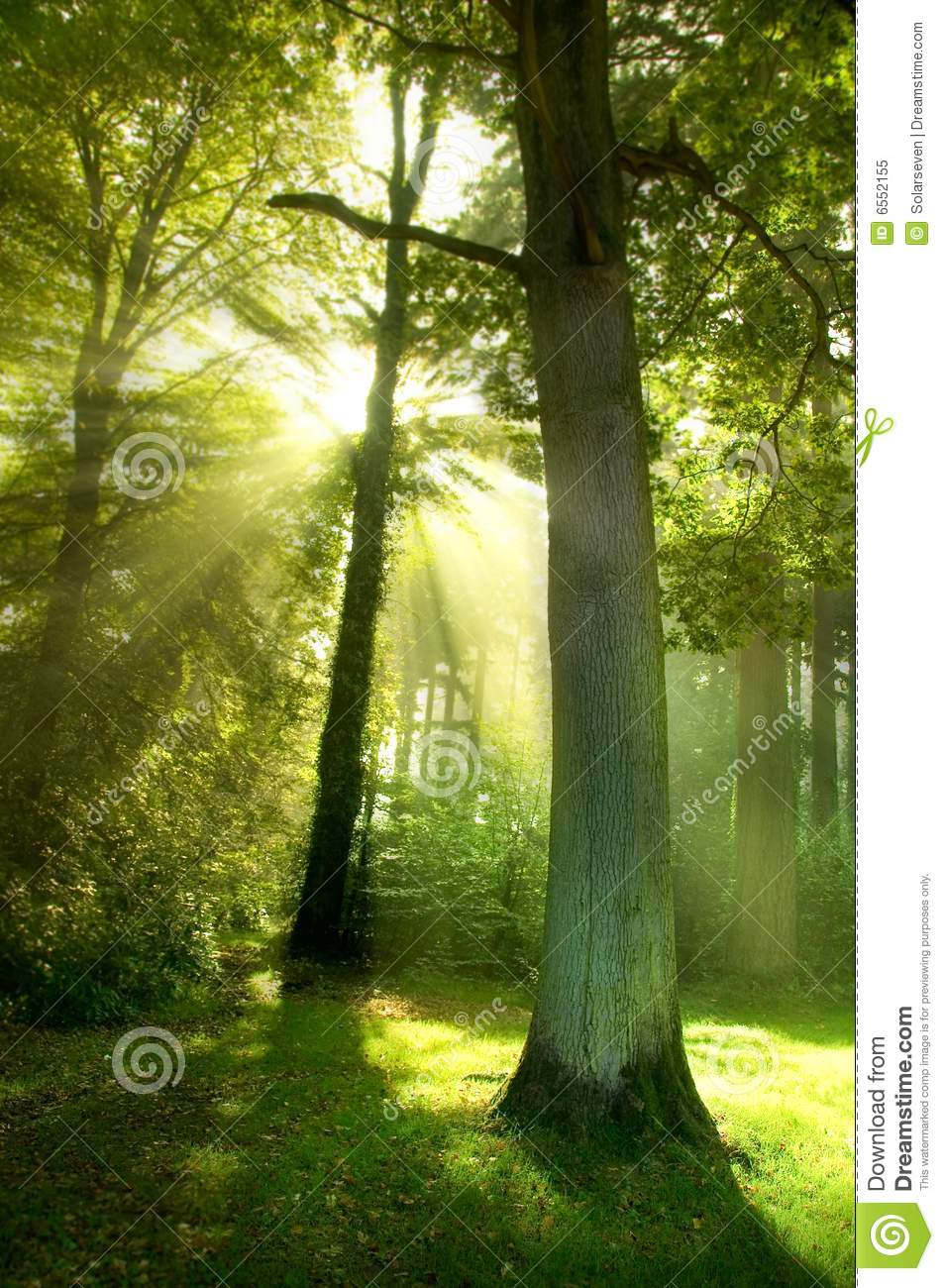 Sun Beams through Trees