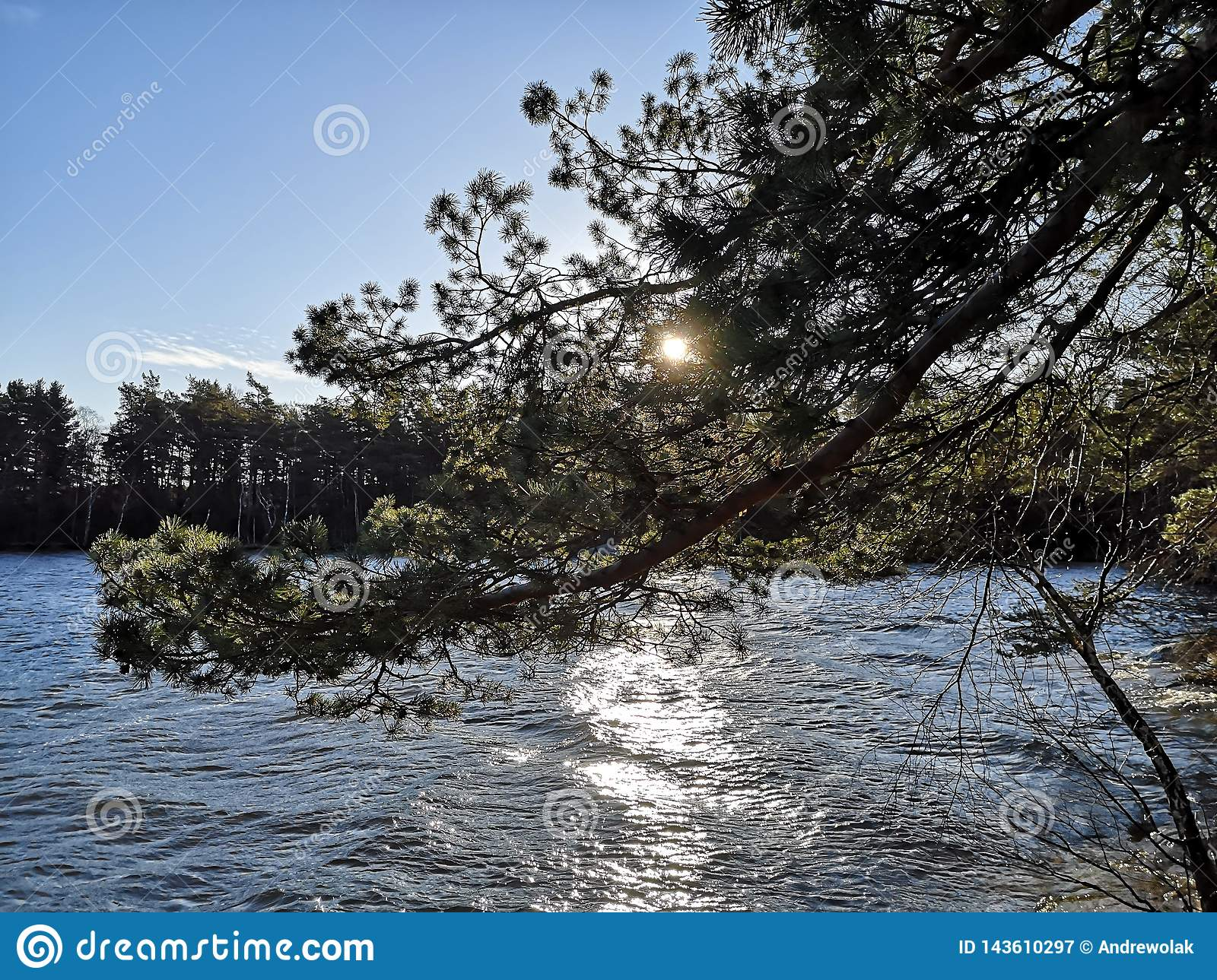 Sun behind the branch