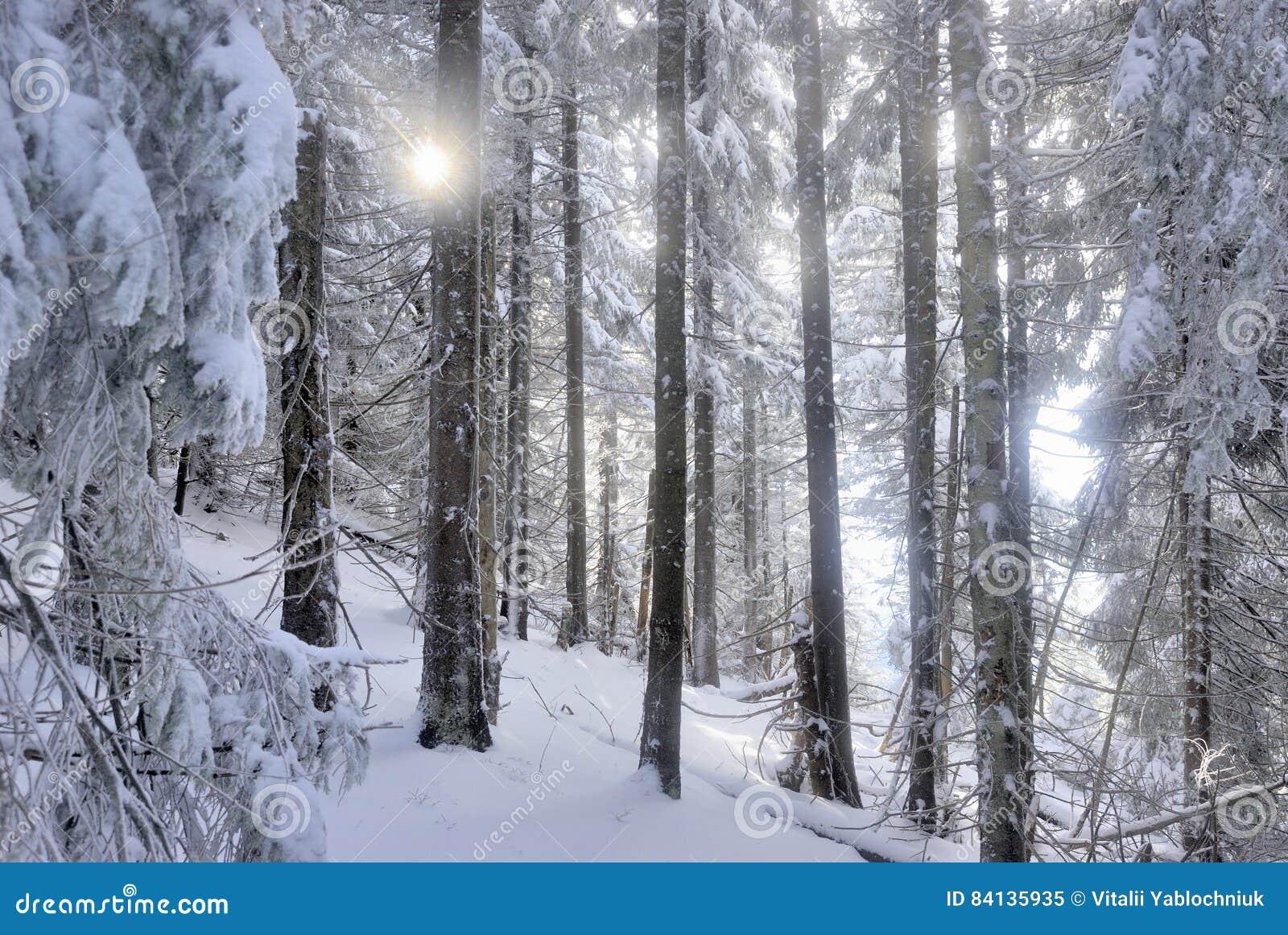 Sun blink across snowed forest