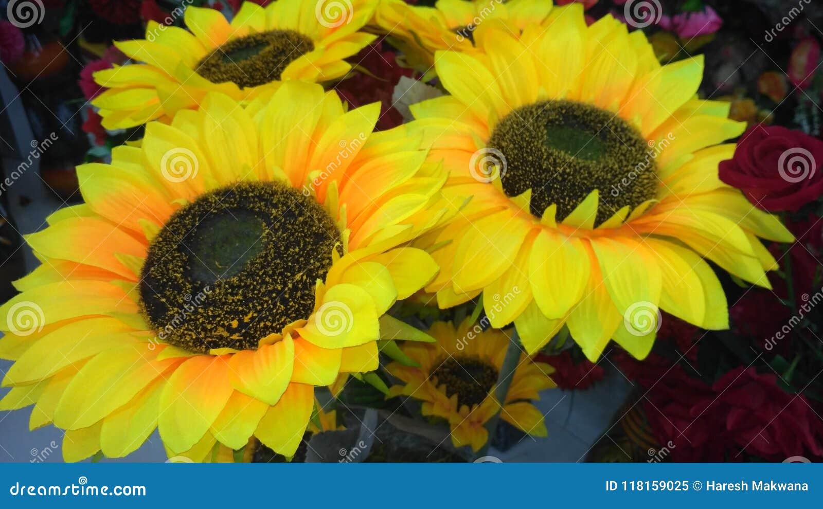 Sun-Blumenanlage