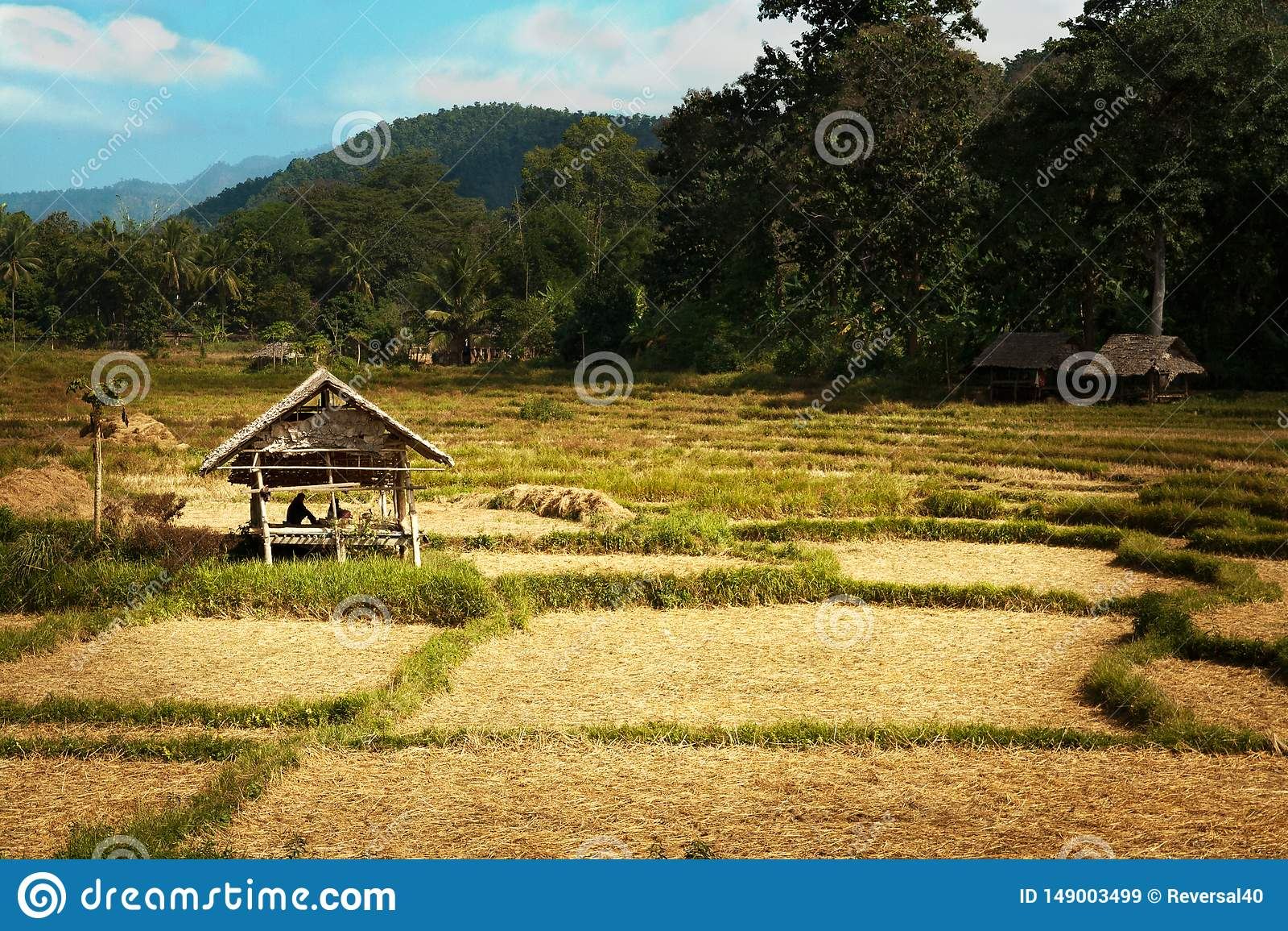 Sun brille la hutte d or de riz