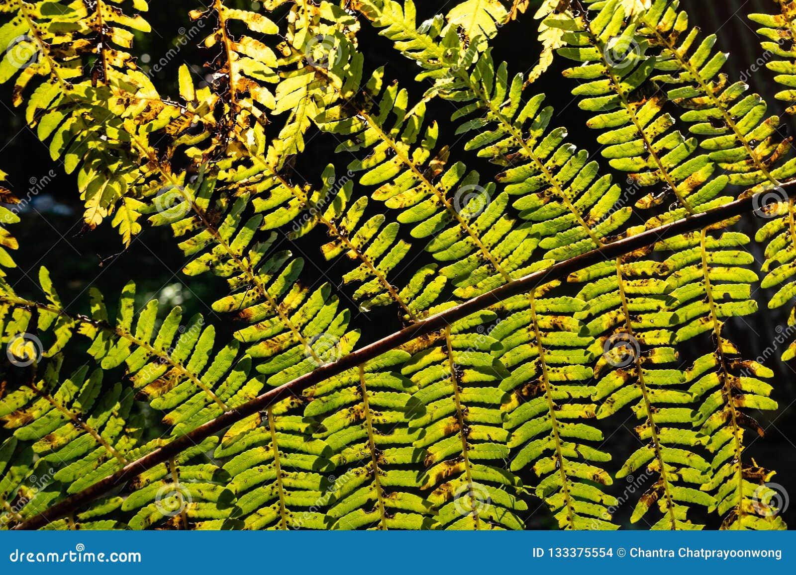Sun che splende tramite le foglie della felce nella foresta