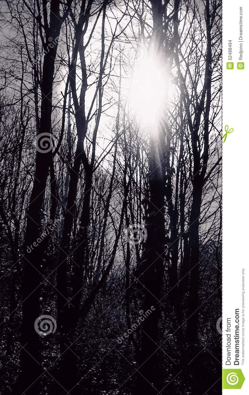 Sun coming through forest