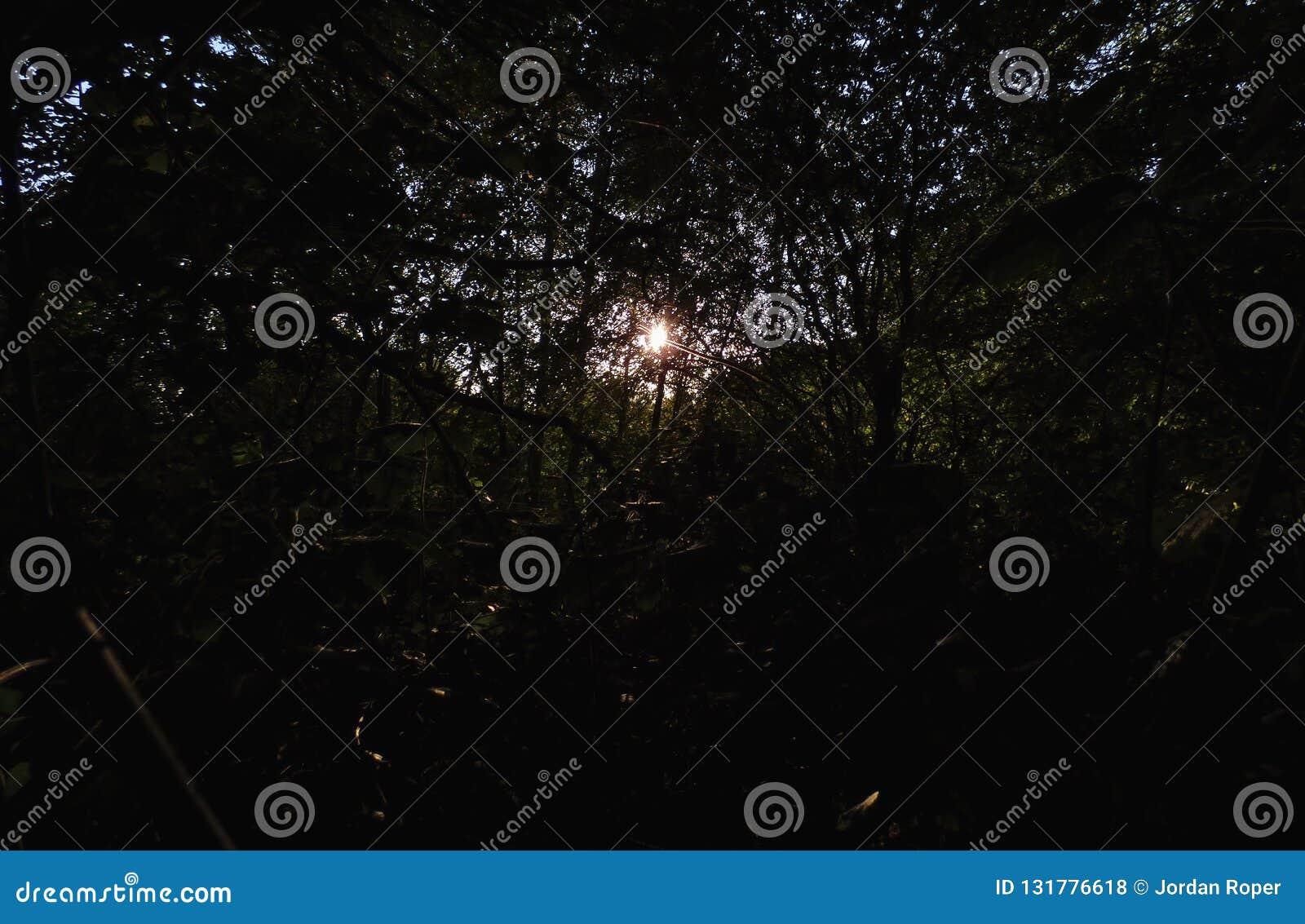 Sun con la trenza, primero plano oscuro con la sol brillante, foto admitida el Reino Unido