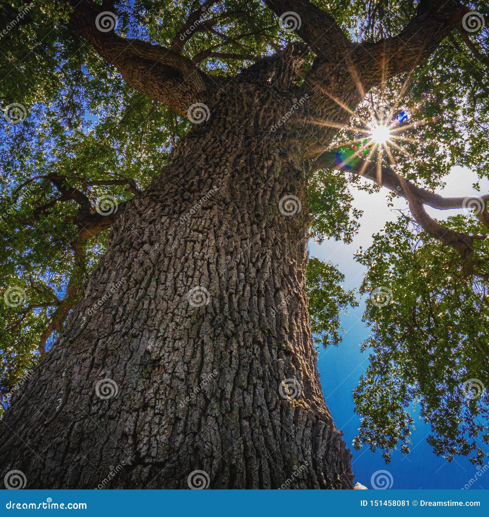 Sun, der durch Blätter des Baums emporragt